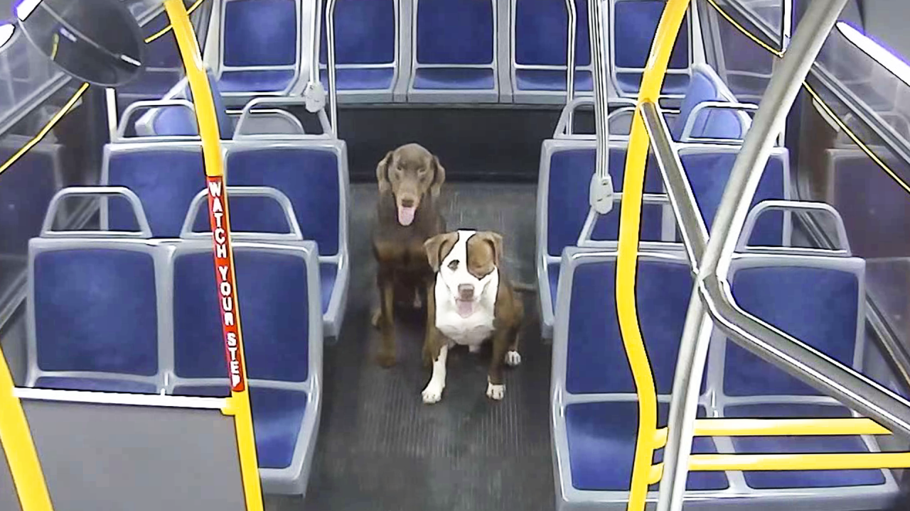 mcts-dogs.png