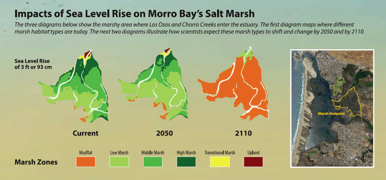 Sea Level Rise Impacts on Morro Bay's Salt Marsh.png