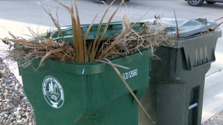 No fines for brush piles as city announces collection program
