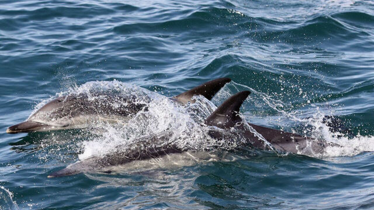 PETA rescues dolphin tangled in crab pot line