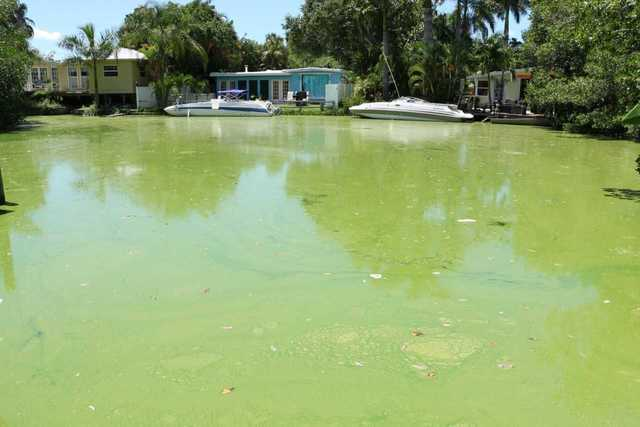Photos: Algae crisis in Lee County in summer 2018