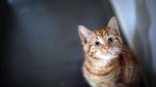 Florida Senator introduces bill to ban declawing of cats