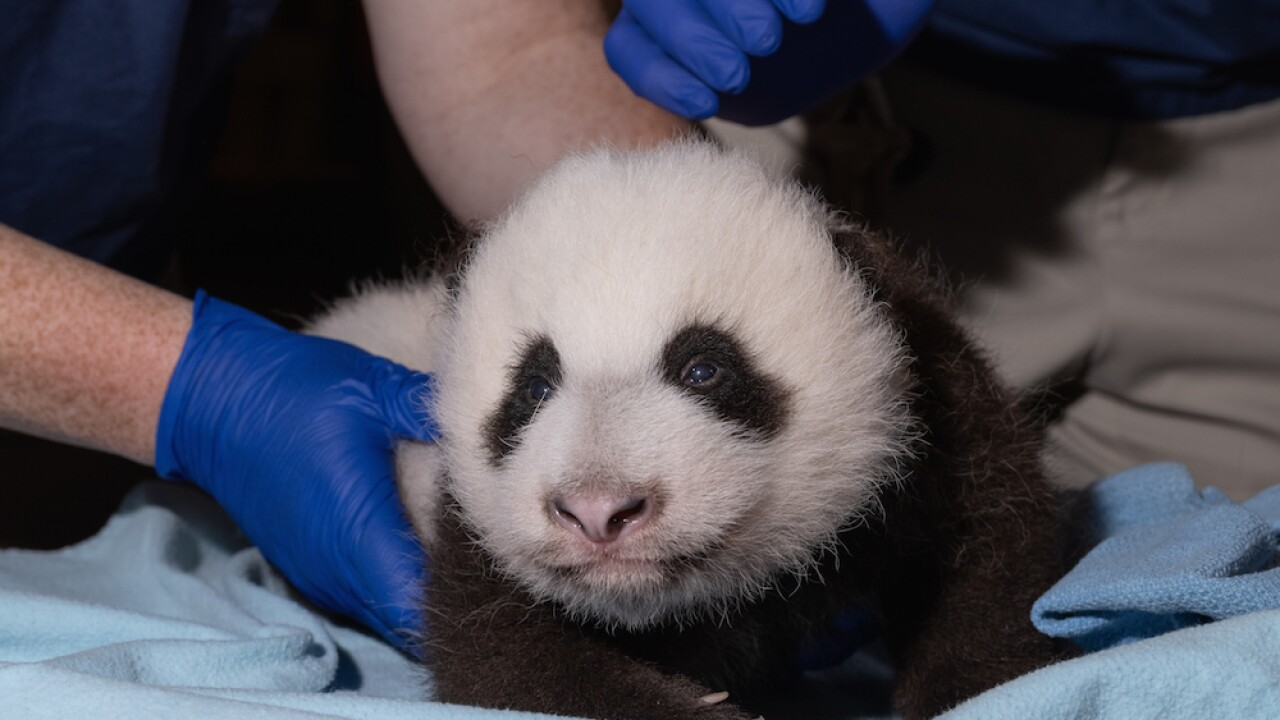 Smithsonian National Zoo needs help naming its newest panda cub