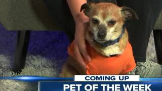 Meet our 23ABC Pet of the Week, Dallas!