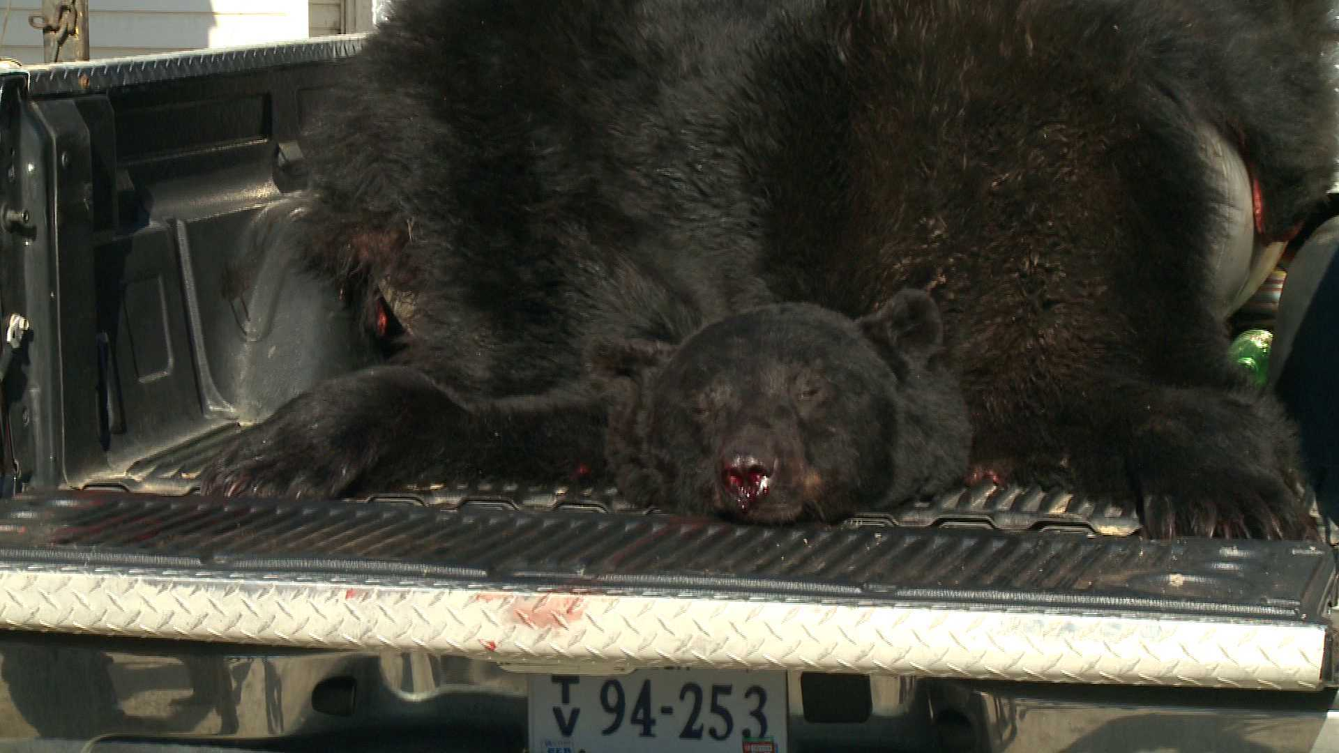 Photos: Hunter bags 674 pound, 9-foot tall bear that could set Va. record
