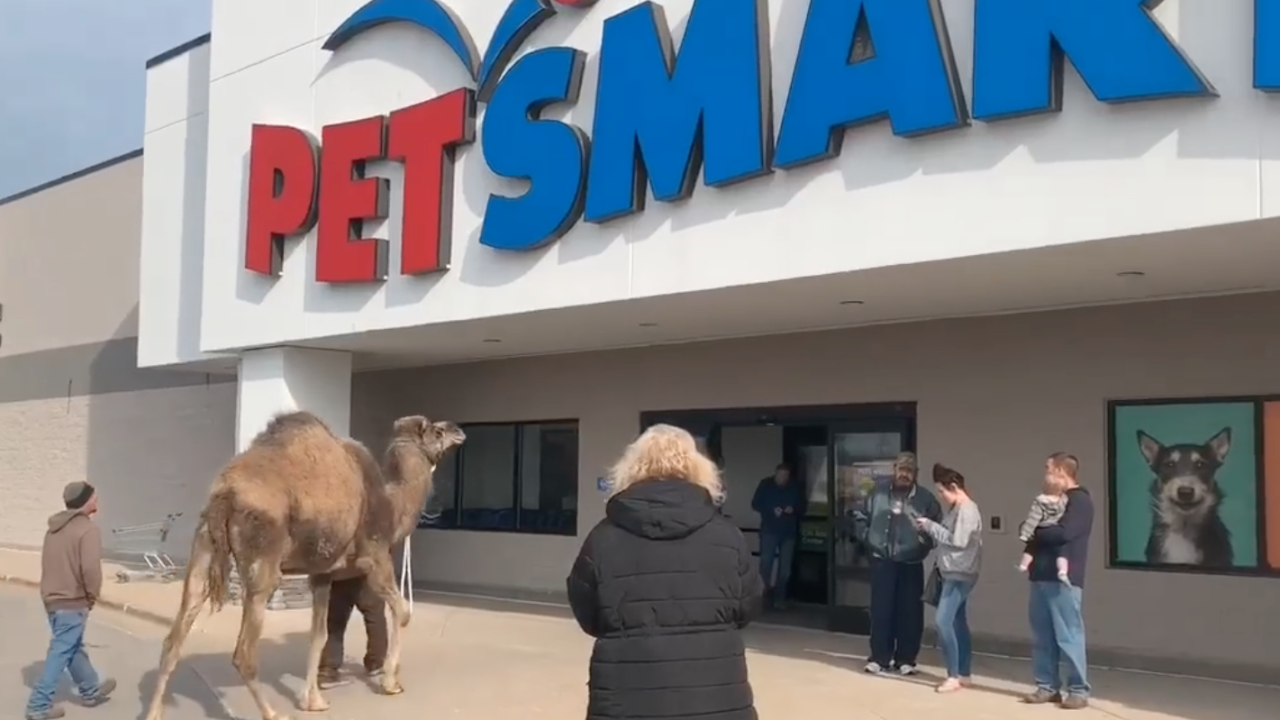 Watch: A petting zoo in Michigan took one of its animals to PetSmart. It was a camel