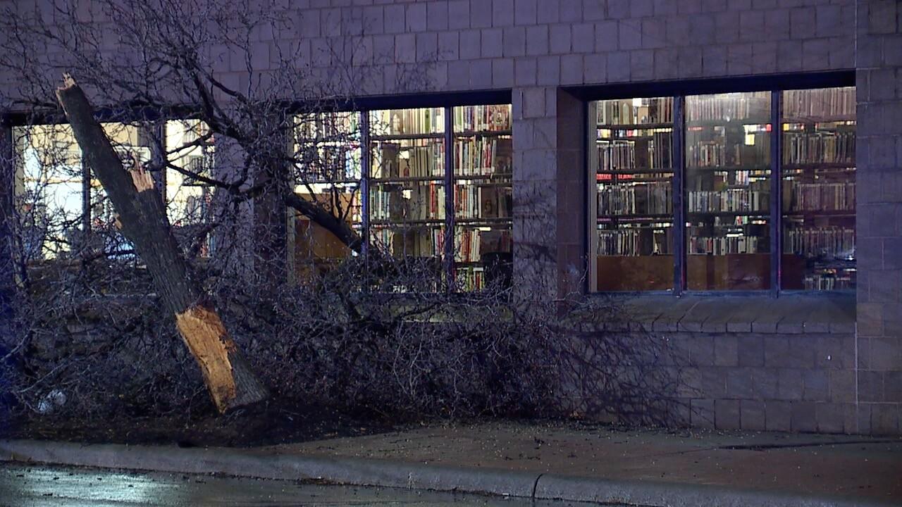 Tree into library 3.jpg