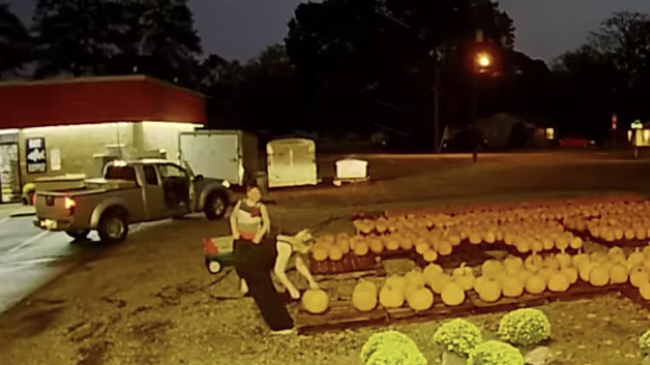 Pumpkin patch thieves caught on camera at Gloucesterbusiness