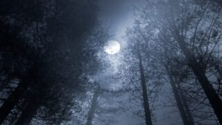 The Wolf Moon: The First Full Moon Of The Year Is Coming At The End Of January
