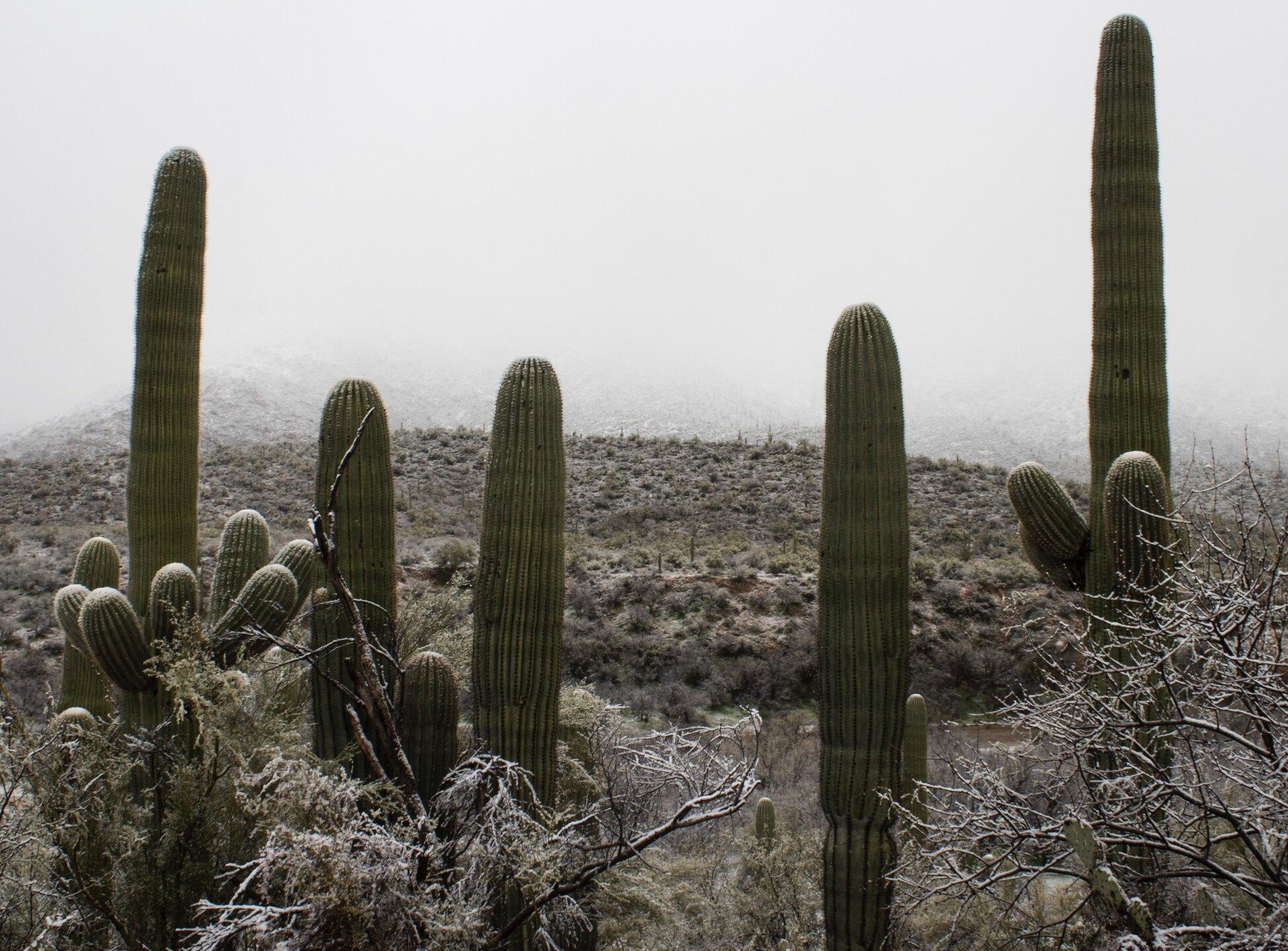 Kelvin-Garcia-catalina-state-park.jpg