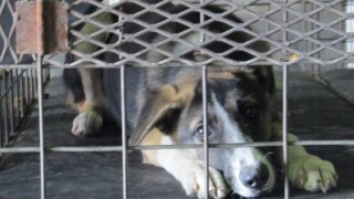Dogs at full Texas animal shelter to be euthanized if not adopted