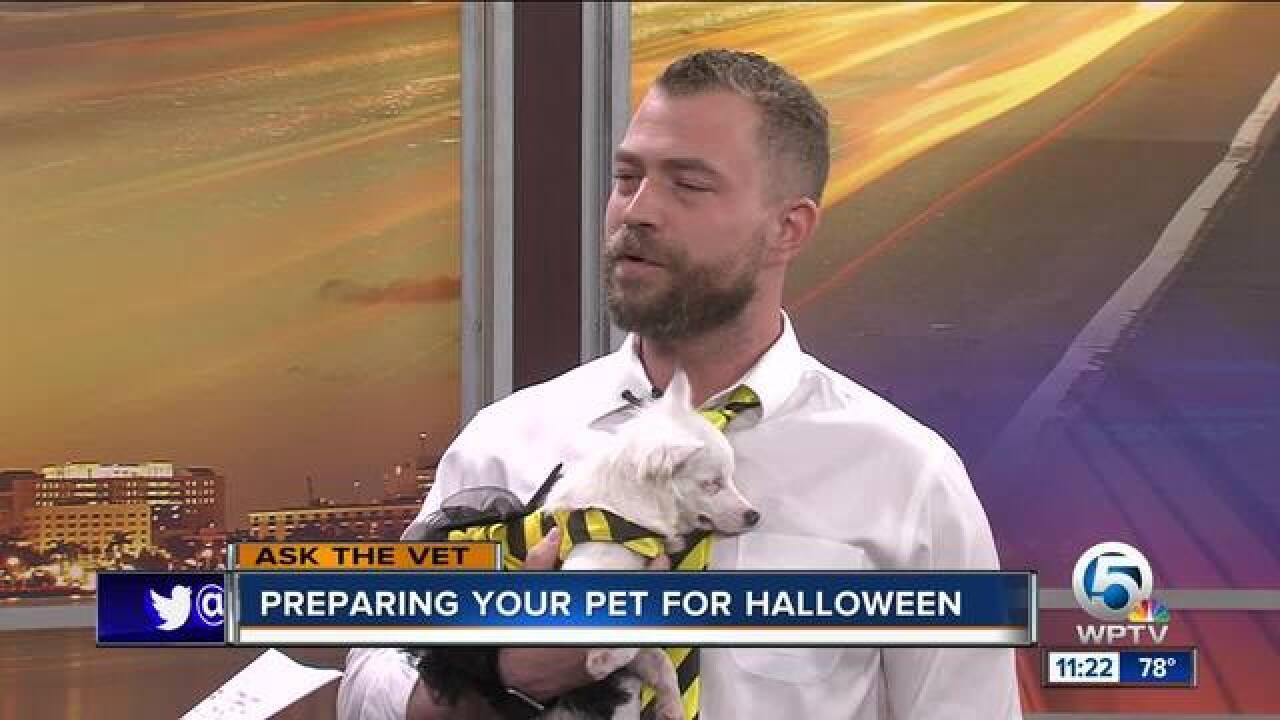 Prepare your pet for Halloween 2018