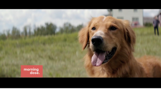 Paws and Claws: Our Top 5 DogMovies