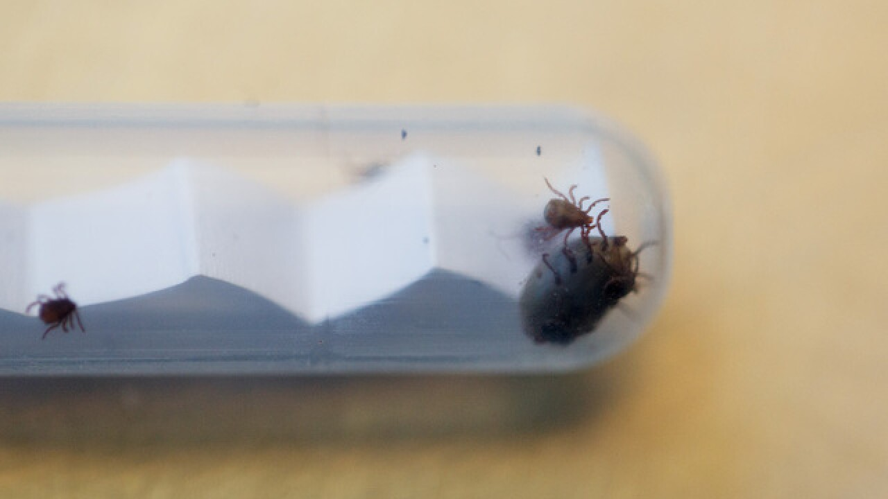 Tick-borne disease suspected in 2-year-old's death