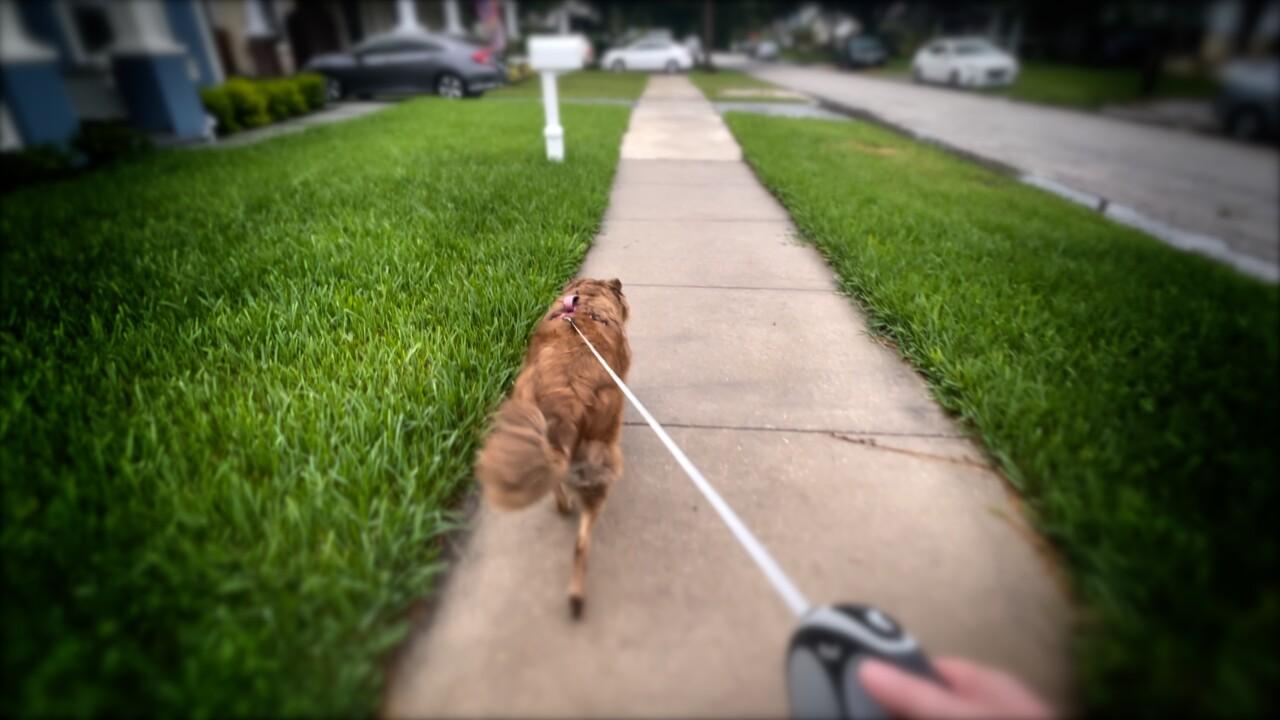 sidewalk infrastructure (1).jpg