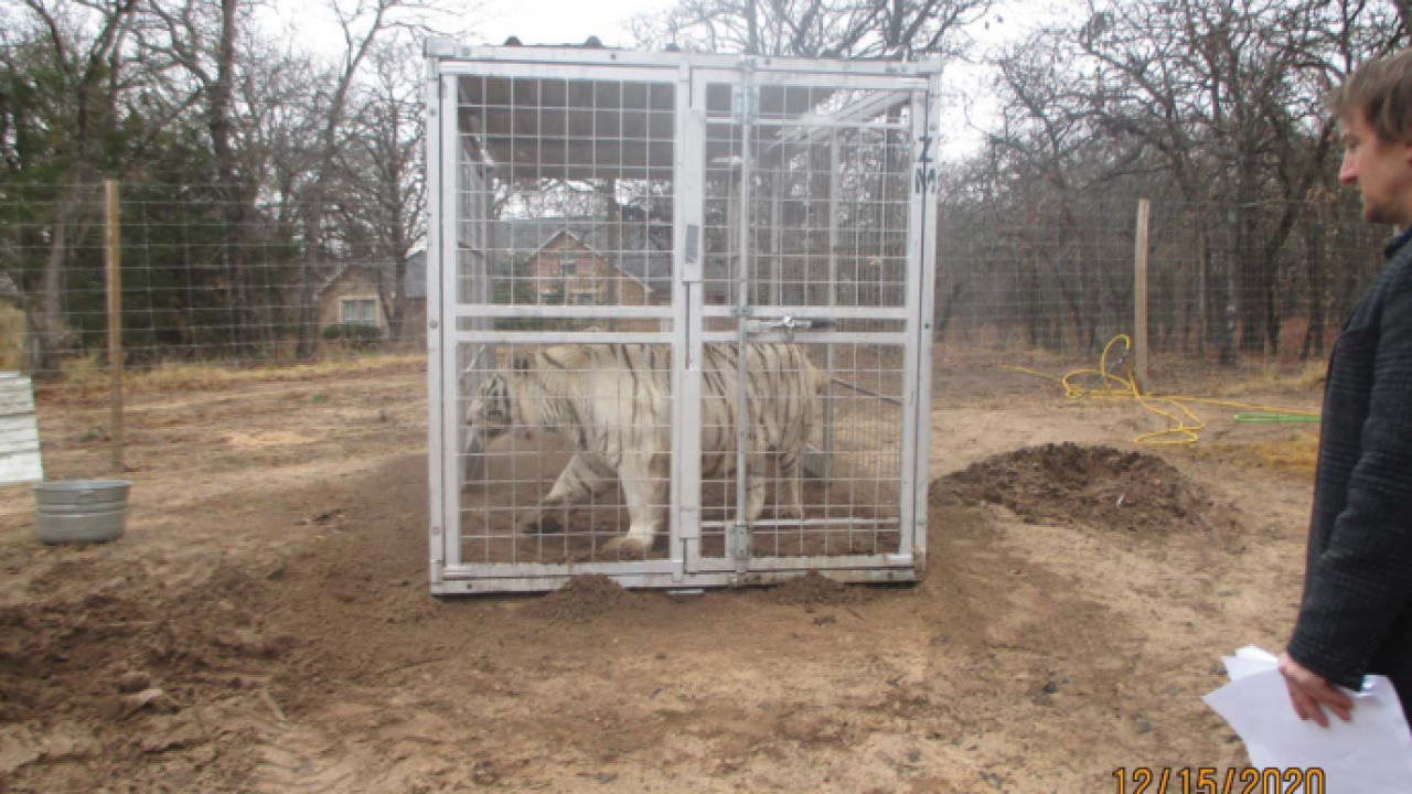 USDA inspection photo white tiger 2.PNG