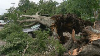 Abbeville Tree Damage.jpg