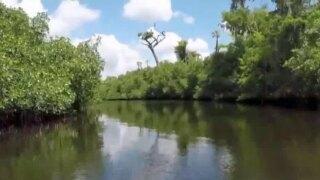 wptv-loxahatchee-river-.jpg