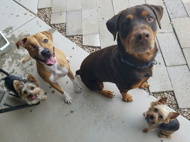 GALLERY: National Spoil Your Dog Day