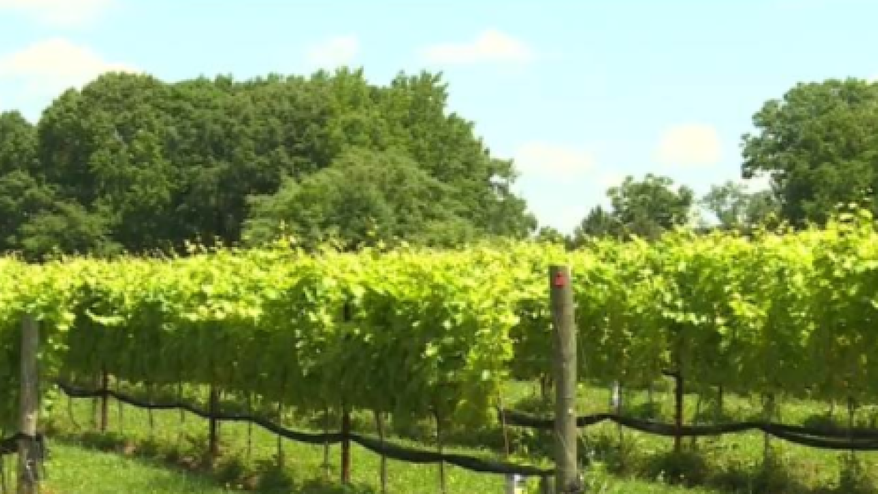 Vineyard concerned proposed ordinance could cause business to suffer