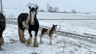Stolen colt from property north of Fort Lupton