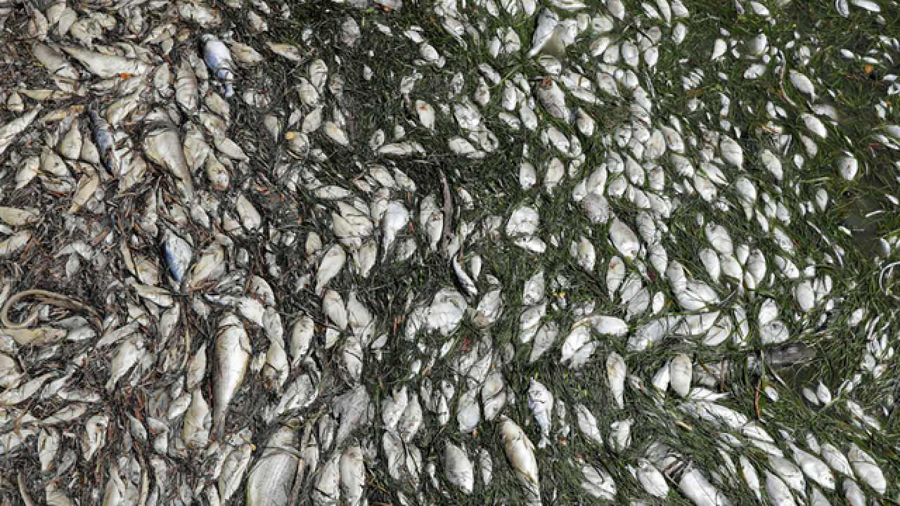 Wildlife advocate stunned by toll on fish from red tide
