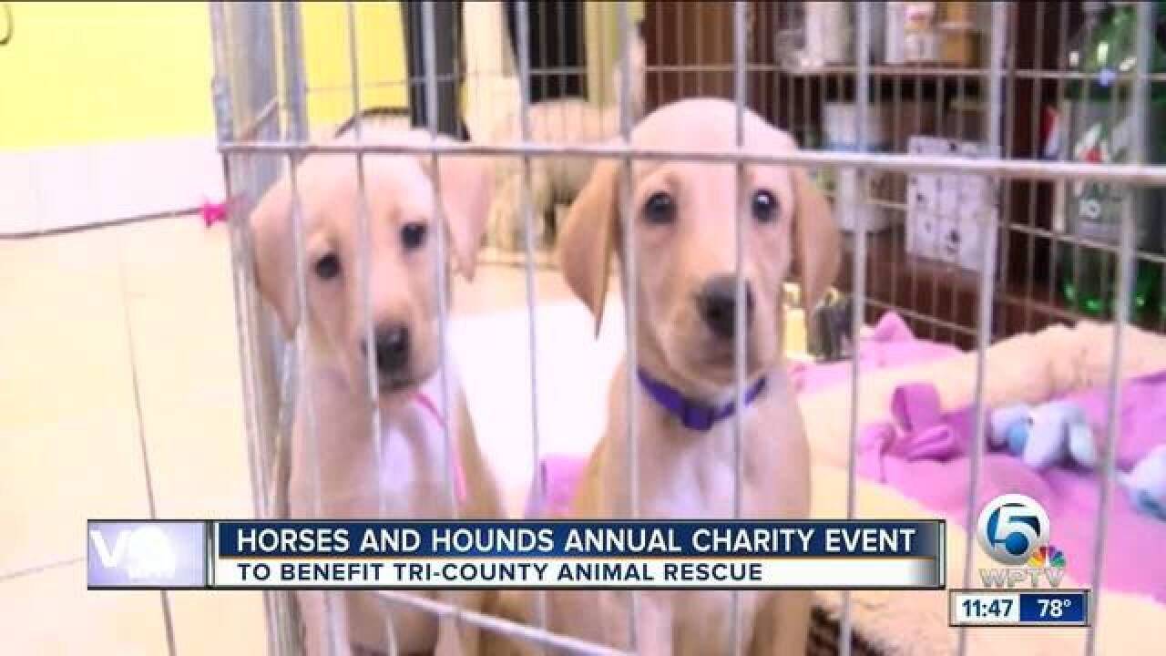 Horses and hounds annual charity event
