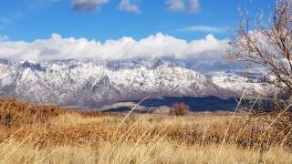 Winter in the wetlands.jpg