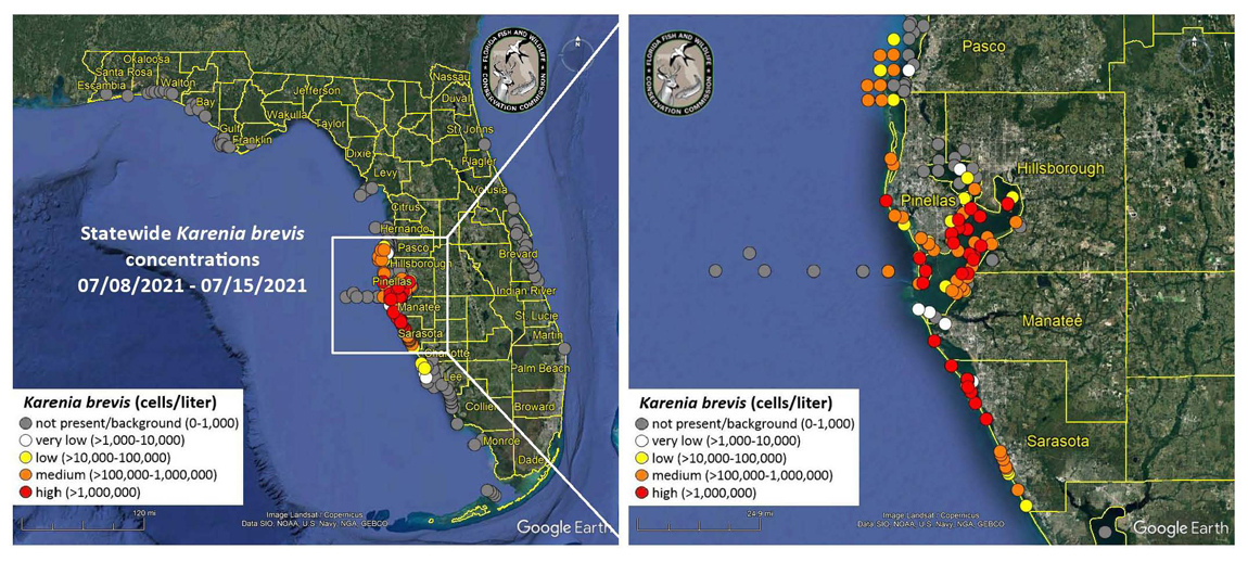 JULY RED TIDE MAP.png