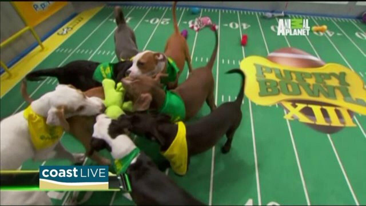 Puppies, puppies, puppies, football, puppies, puppies and puppies on CoastLive