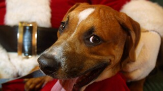 San Diego Humane Society waiving adoption fees for the holidays