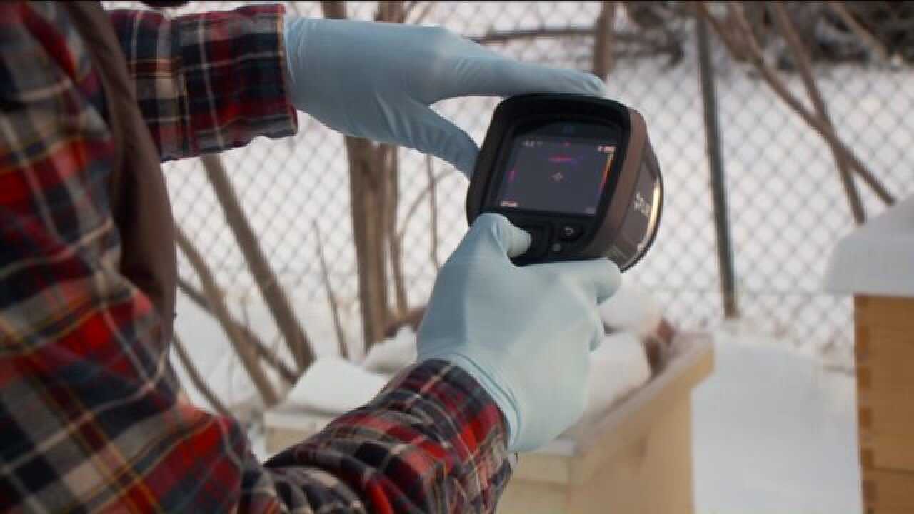 Infrared cameras helping Utah beekeepers inspect hive populations duringwinter