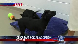 Adopt a pet at the Ice Cream Social happening now