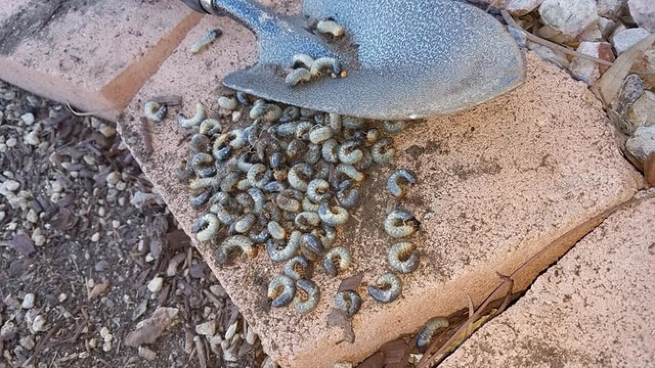 Neighbors dealing with costly bug problem