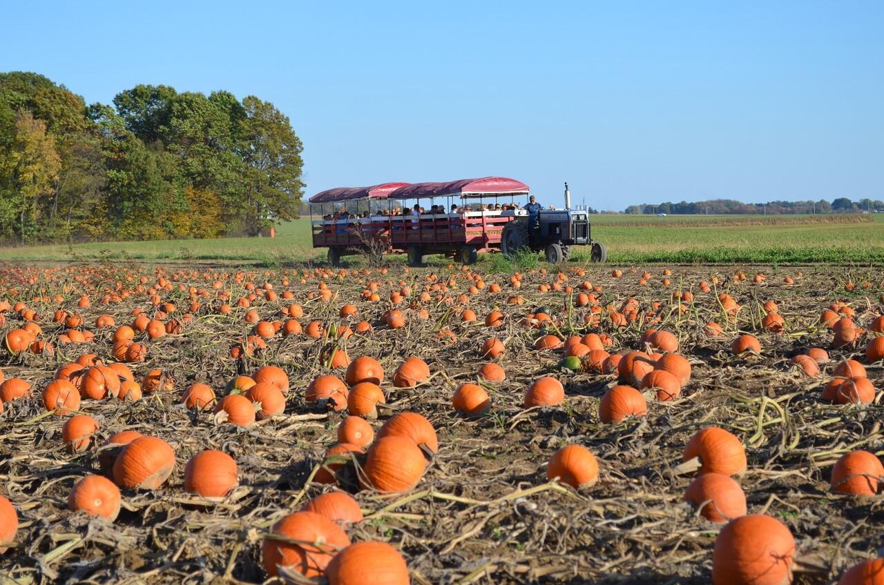 Ramseyer farms.jpg