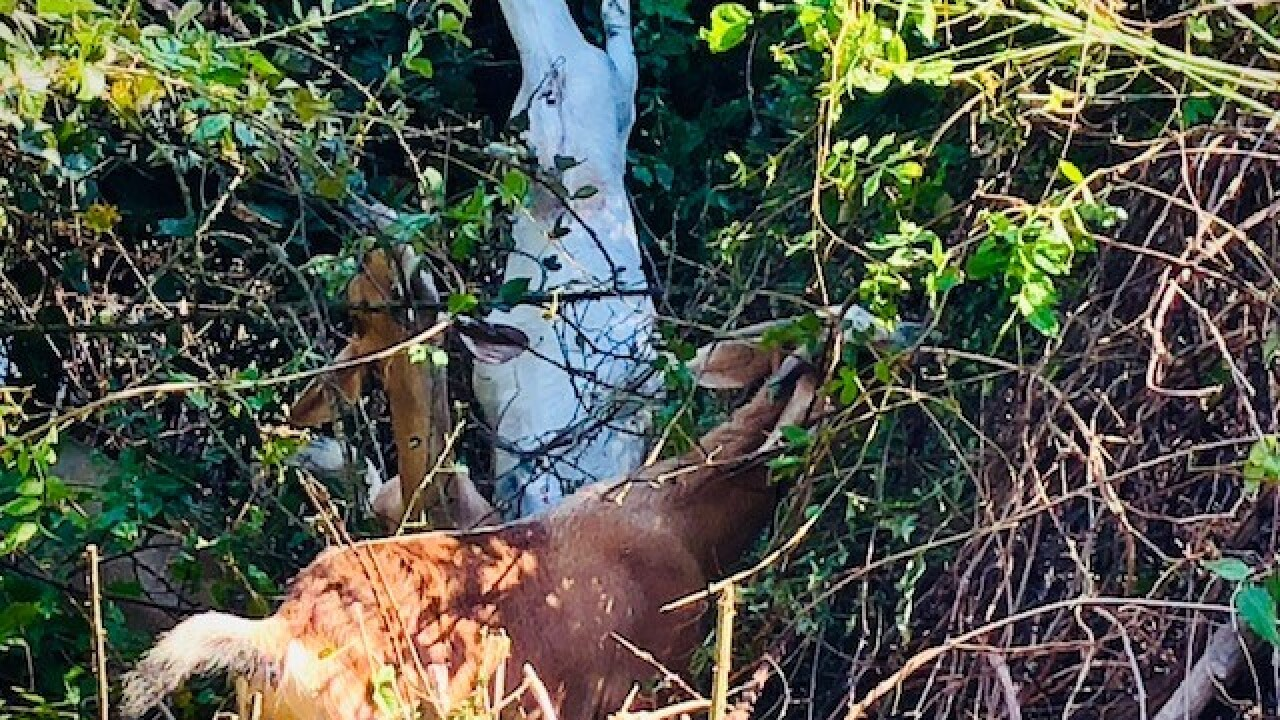 goats at hoffler creek wildlife preserve.jpg