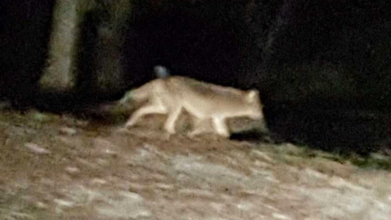Reported Coyotes Sighted, Pets Missing In Madison Neighborhood