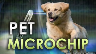 Free Microchip Event