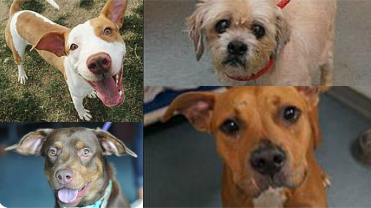 Meet the 86 Richmond dogs who desperately need your help