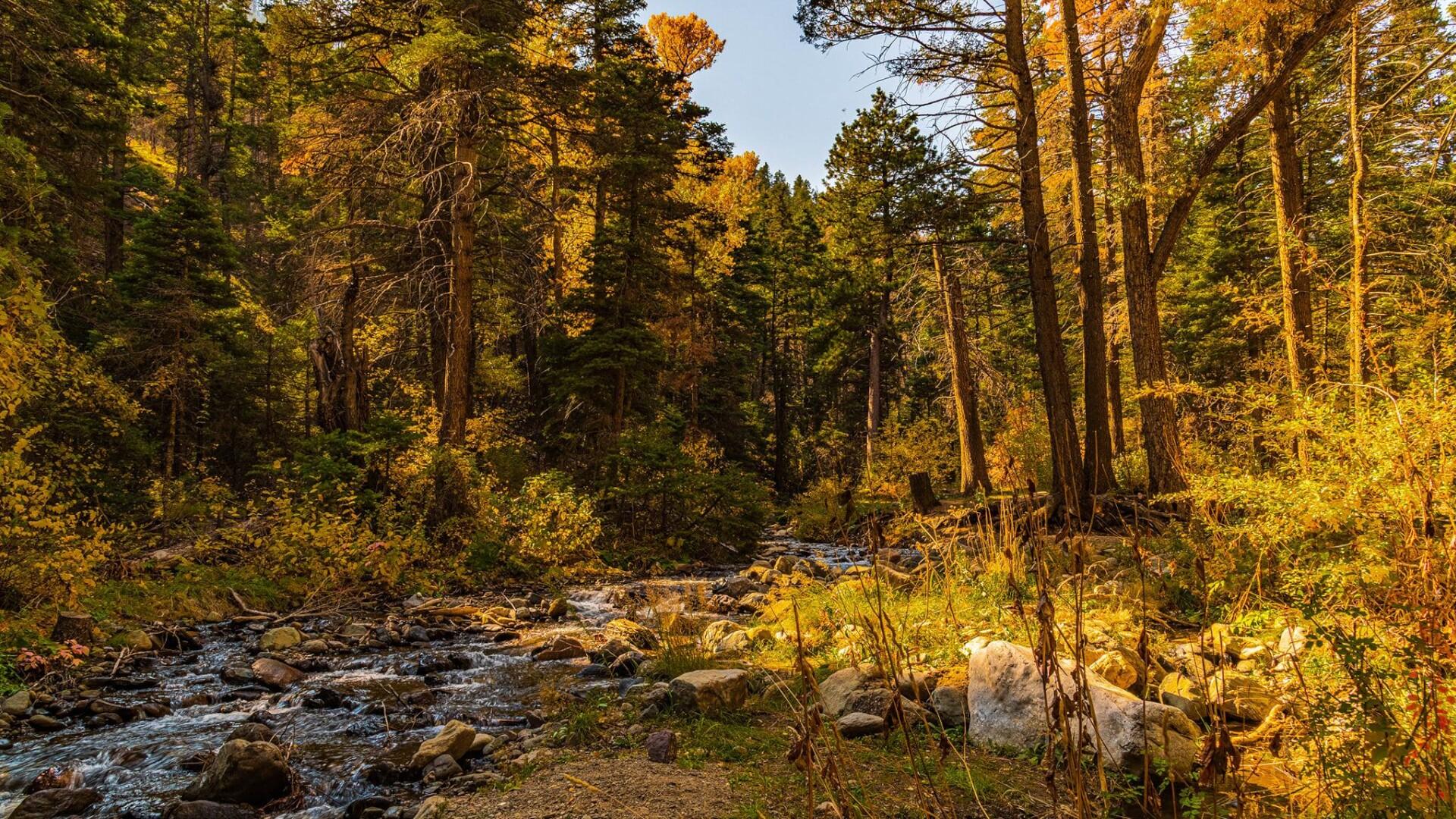 Heyden Creek Steve Shugart.jpg