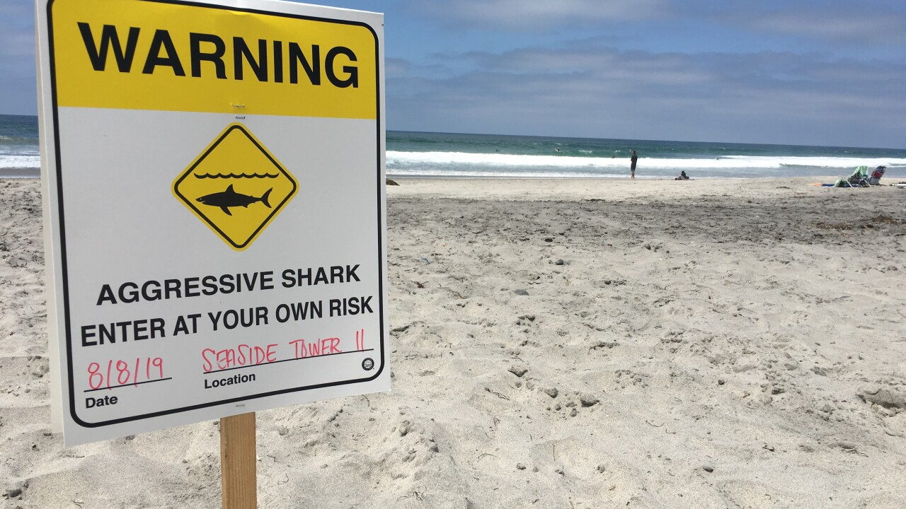 Severely injured sea lion prompts aggressive shark warning on San Diego-area beaches