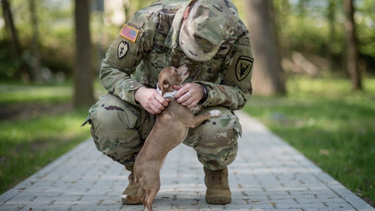 "In the ten years since ""Dogs on Deployment"" began, the group has helped more than 2,400 pets all across the country find temporary foster homes, while their military owners are deployed."
