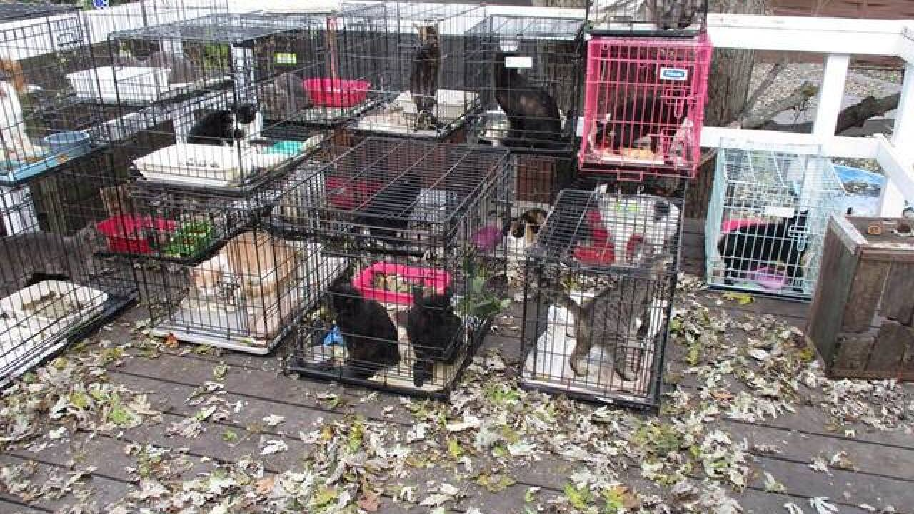 Police remove 47 cats, 6 dogs from filthy home in northwest Indiana