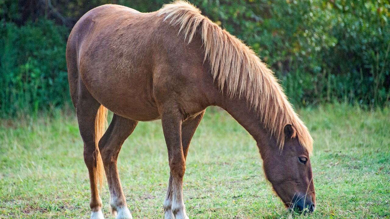 Advocates calling for Assateague Island visitors to slow down after mare hit and killed