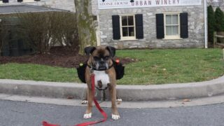 Winery Has A Dog Delivering Wine To Customers' Cars To Promote Social Distancing