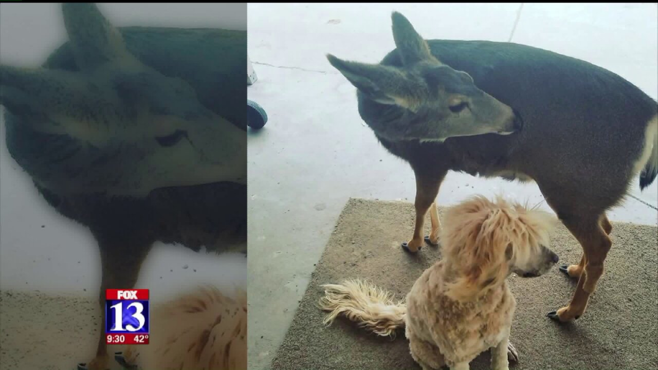 Community upset after Utah wildlife officials relocate deer known as neighborhood pet