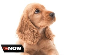 Finding the right breed of dog to help cope with anxiety
