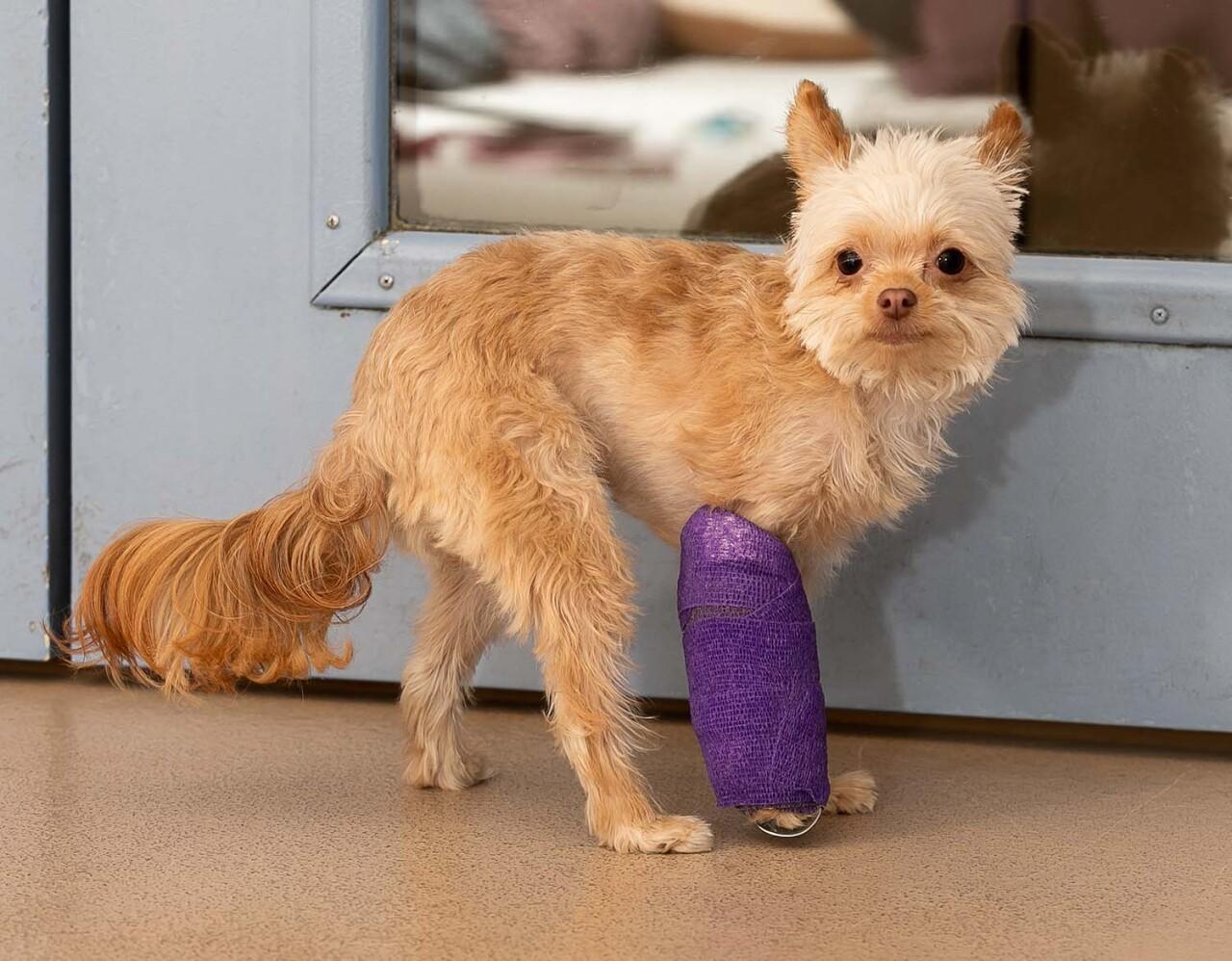 queeny dog leg broken whs