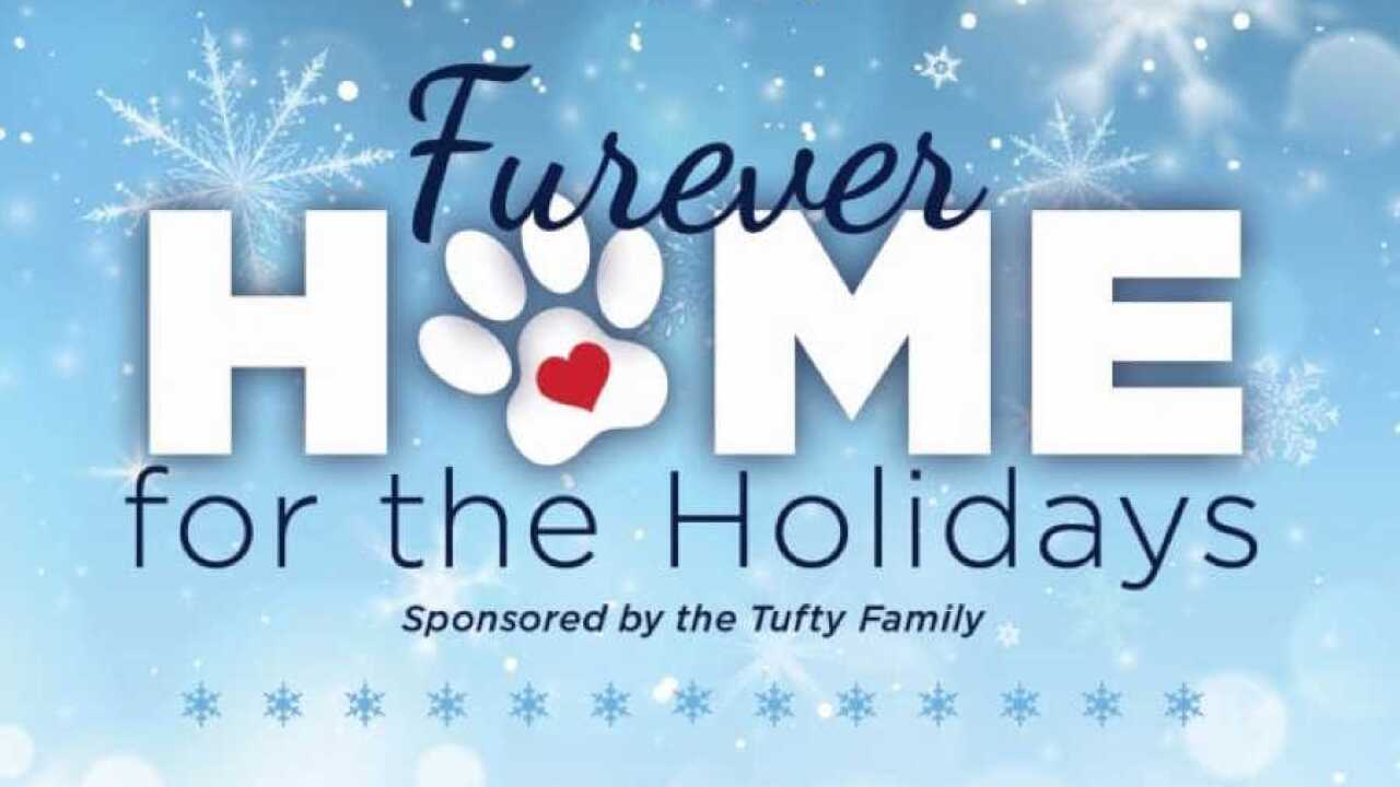 Furever home for the holidays.jpeg