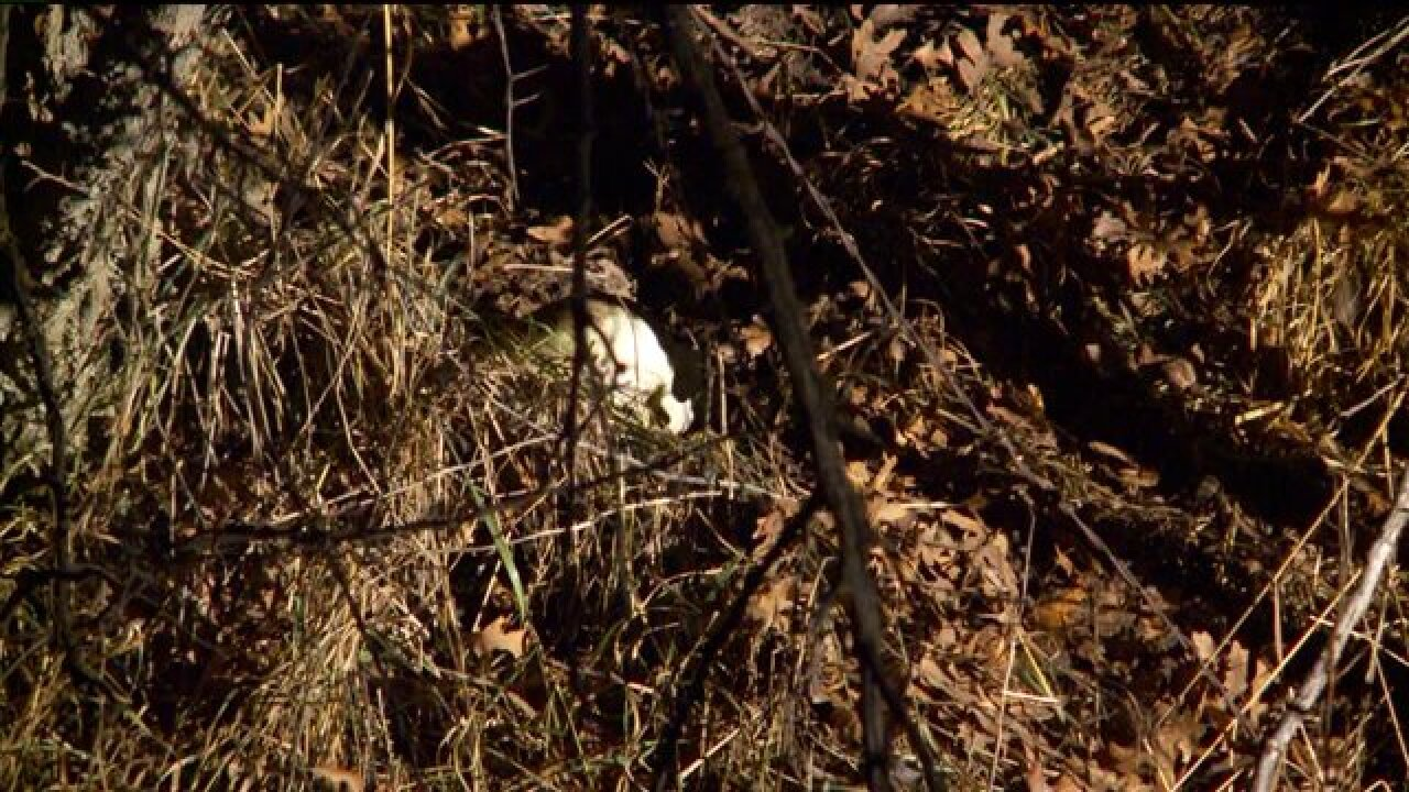 Crime lab team investigating after skull found along Davis Countyhighway
